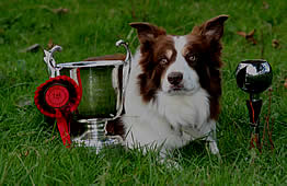 Fox was the Cumbrian Sheepdog Championship Trophy winner 2010